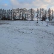 13. Ale někoho sníh přeci jen přilákal - malou sáňkařku. No tak to nebylo úplně zbytečné :-)